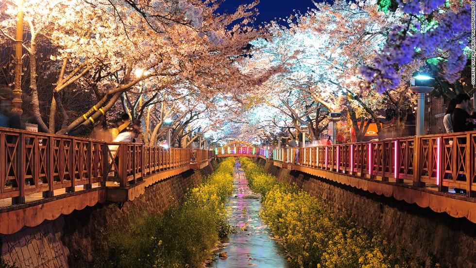 130408142349-south-korea-blossom-gallery-10-horizontal-large-gallery